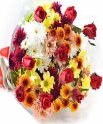 Gerberas collection - Get Well Flowers